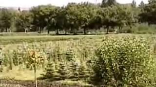 Перкальский питомник хвойных растений и кустарников (ель голубая, можжевельник, туя) 2004 г.(, 2013-12-07T09:23:16.000Z)