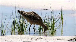Florida Birding