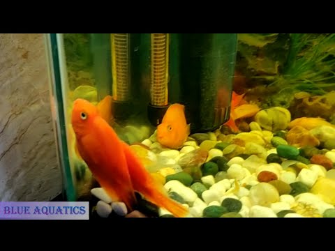 Steps To Recover - Fish Sitting At The Bottom Of Tank
