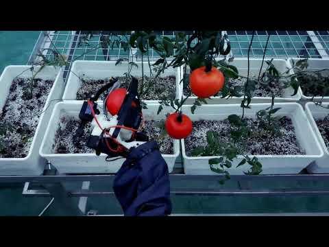 China Robot Harvest