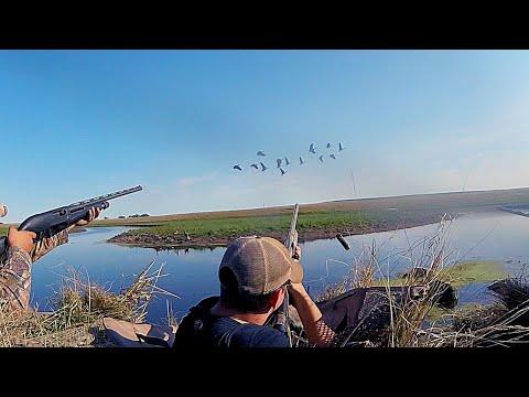 South Dakota Early Season Goose Hunt