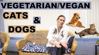 Veterinarian Interview | Vegetarian/Vegan Cats and Dogs Pt. 1