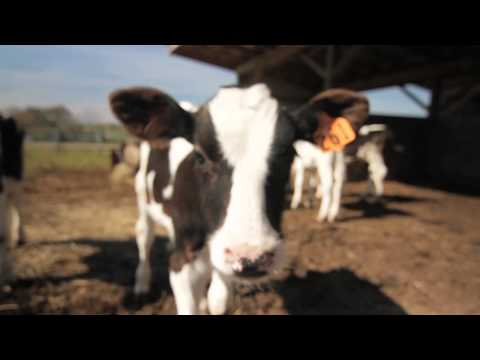 Reedy Fork Farms Organic Dairy - Producer Profile - Company Shops Market