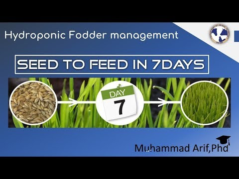 HydroPhonic Fodder Management and feeding