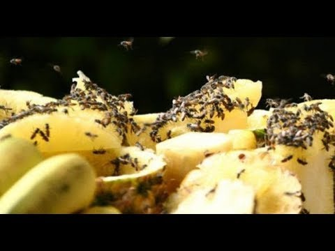 Вопрос: Как избавиться от множества мелких мушек на кухне?
