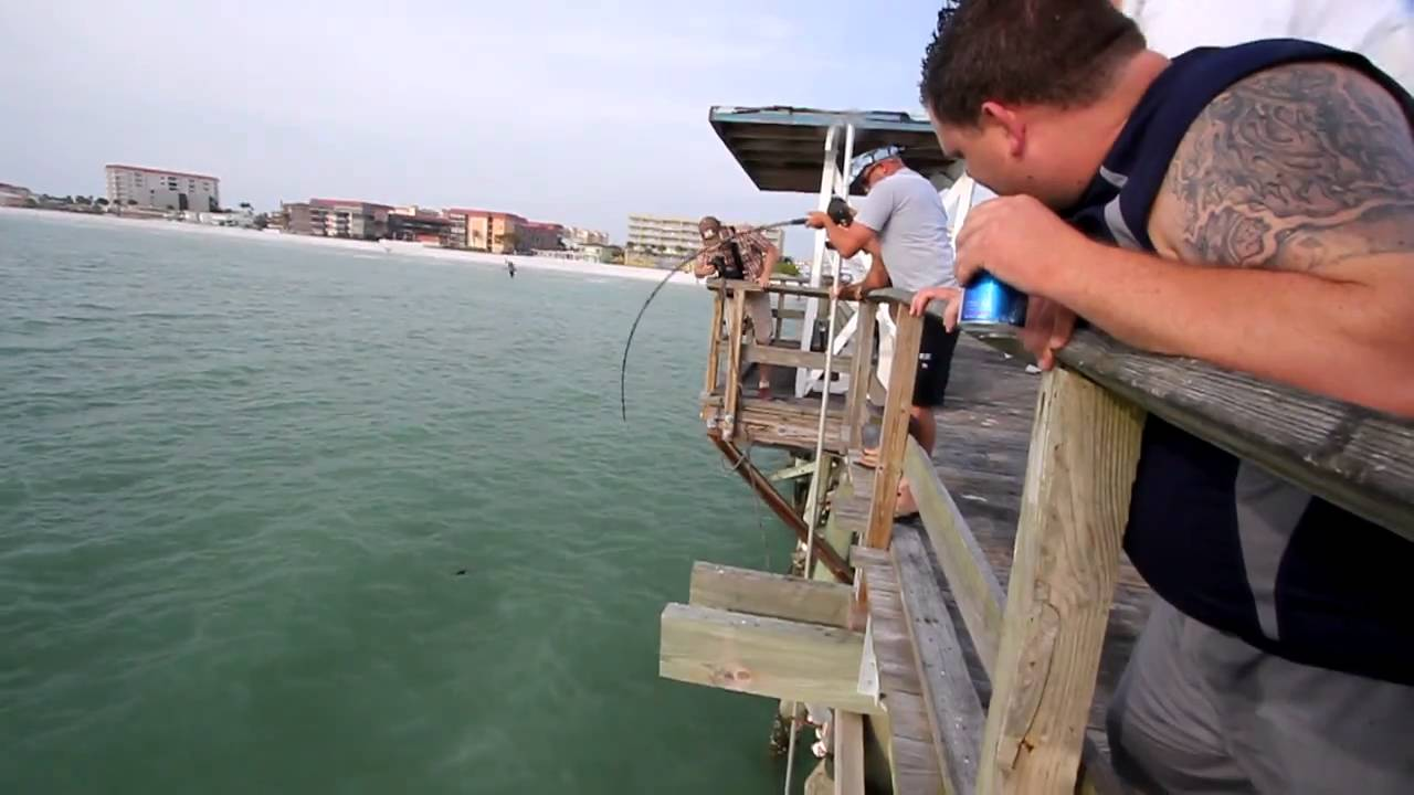 Shark fishing in madeira beach fl youtube for Out of state fishing license florida