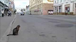 Как коту перейти дорогу? Can the cat cross the road?