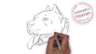 Как рисовать красивую собаку  Как ПРОСТО нарисовать собаку