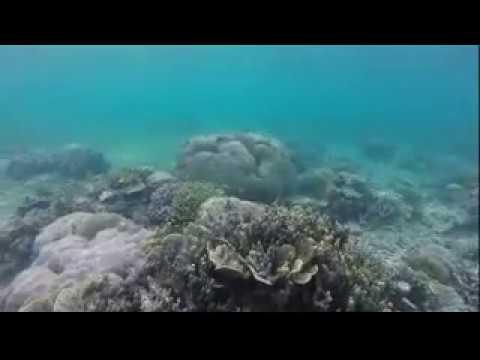 Luwuk Sulawesi tengah ( Snorkeling)