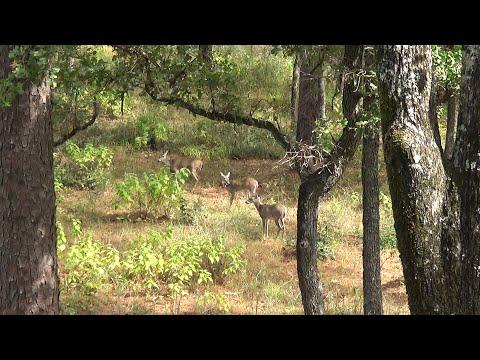 Texas Public Land - First Self Filmed Bow Hunt 10-17-19