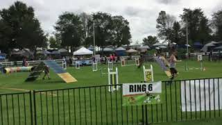 Rickfield Farm Maggie 2018 National Championships Gamble 1