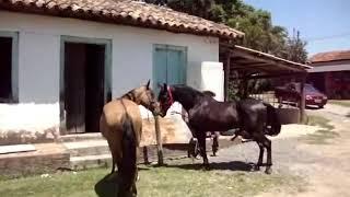 сильная любовь лошадей