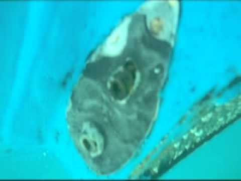 Ohana 01/10/12 Hull Service Condition Video