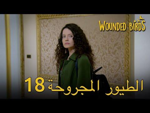 Wounded Birds Arabic 18 | 18 الطيور المجروحة