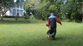 Denis K9 Training