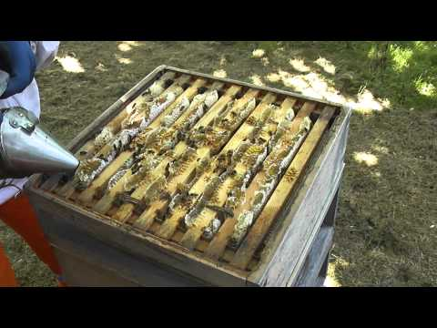 Keeping Honey Bees – The Honey Harvest 1 – Setting up The Hive