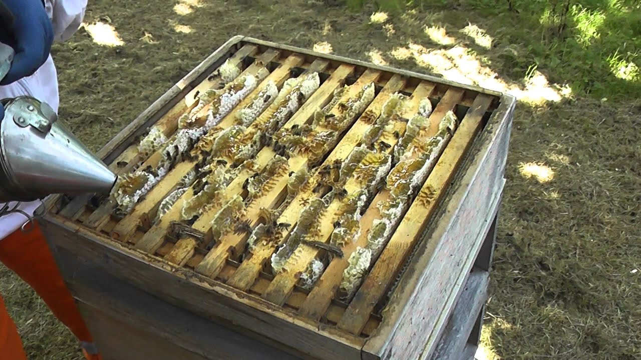 Honey Harvesting Step 1 of 3 - Getting The Hive Ready - YouTube