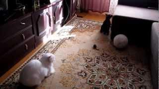 Два кота (фильм 1)