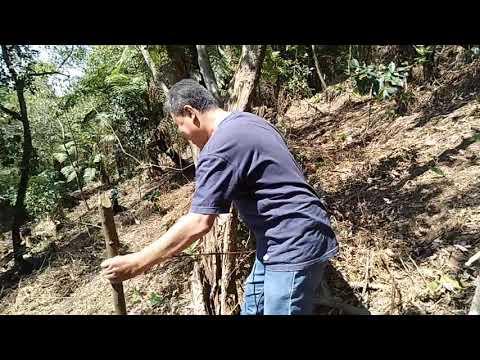 Demi sambangi petani, pegawai dinas pertanian ini rela tempuh medan hutan berbahaya dan terjal sampai terjatuh