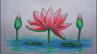 how to draw beautiful water lily | easy art using pencil  oil pastel