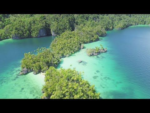 Indonesia Travel & Spearfishing - THE QUEST