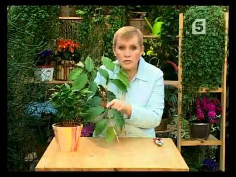 Discover ideas about seeds. Купить кофейный топиарий желтый, кофейное дерево, кофейный топиарий, кофе, божья коровка, подарок.