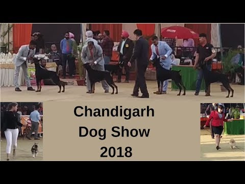 Chandigarh Dog Show 2018 - Wholesale Dog Market