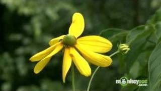 August Gardening Tips