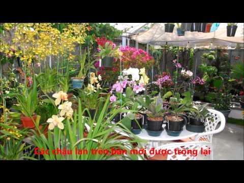 Kỹ Thuật Trồng Phong Lan    Lan Hồ Điệp  Phalaenopsis   Tập II