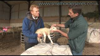 Problems with the Newborn Lamb -- Entropion.  Presented by Adam Henson.