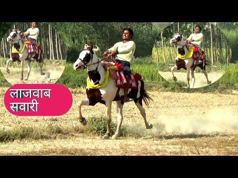 नया घोङा TRAINING BY RIDER PONGA YADAV INDIAN HORSE TRAINING CENTRE