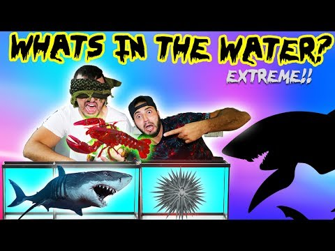 WHATS IN THE WATER CHALLENGE! (REAL LIVE ANIMALS)