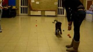 Dog Training Dukinfield Cheshire