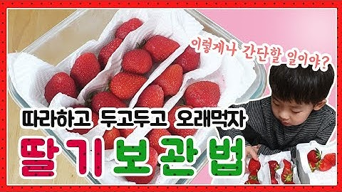 #딸기보관법 #신선한 #딸기 #수명연장 [생활꿀팁] 안보면 후회할 딸기보관방법🍓/언제까지고 신선하게 아껴먹자/버리지말고/두고두고먹자