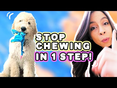 STOP PUPPY CHEWING: 1 Easy Step!
