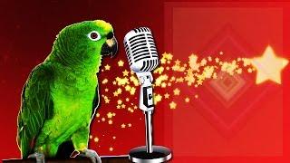 Попугай Жако с богатым песенным репертуаром