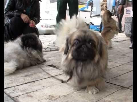 Выставка собак. Кингисепп.avi