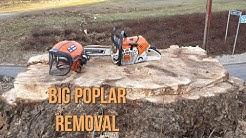 Big Poplar Removal