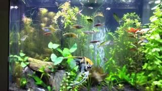 planted 36 gallon bow front aquarium
