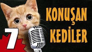 Konuşan Kediler 7 - En Komik Kedi Videoları