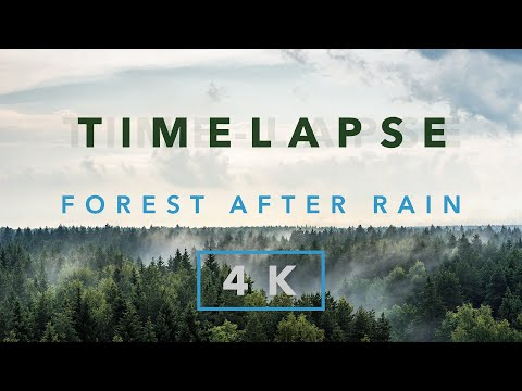 TimeLapse: Forest after rain 4K. Shoot on Sony A7II