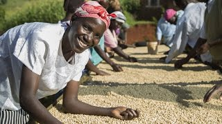 Coffee Farming in Kenya: Lasting Solutions