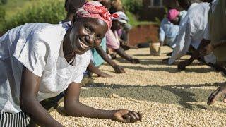 Coffee Farming in Kenya: Lasting Solutions