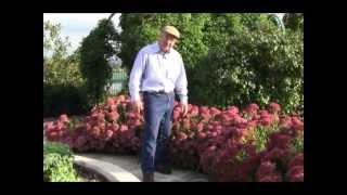 Best Perennials for a Sunny Garden - Sedum
