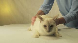 Massage for cat. Массаж коту.