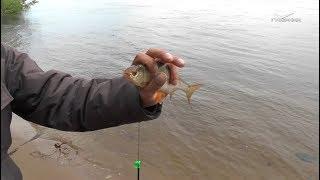 Рыбалка с берега Рыбацкое счастье