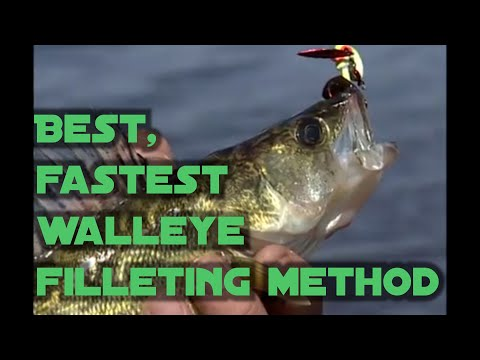 Best, fastest walleye filleting method for maximum meat