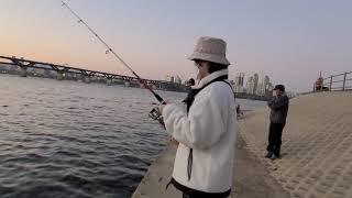 #86 처음해보는 서울 한강 낚시