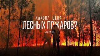 Какова цена лесных пожаров?