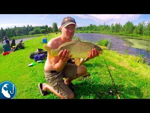 Ловим карпа на метод фидер | Рыбалка с Родионом